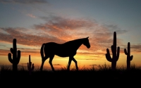 Papago Park Horseback Riding